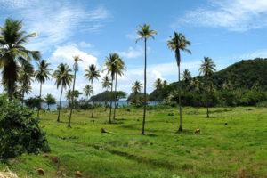 Panorama di Dominica